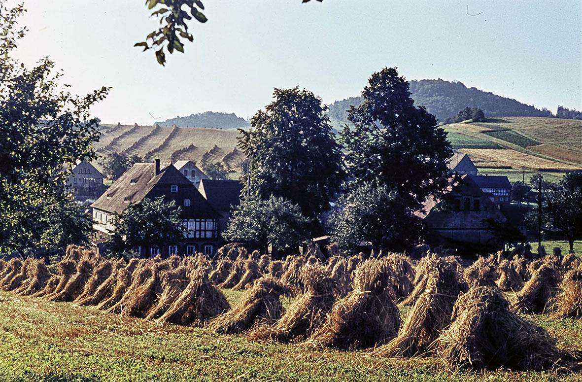 Großhennersdorf_Am großen Berg